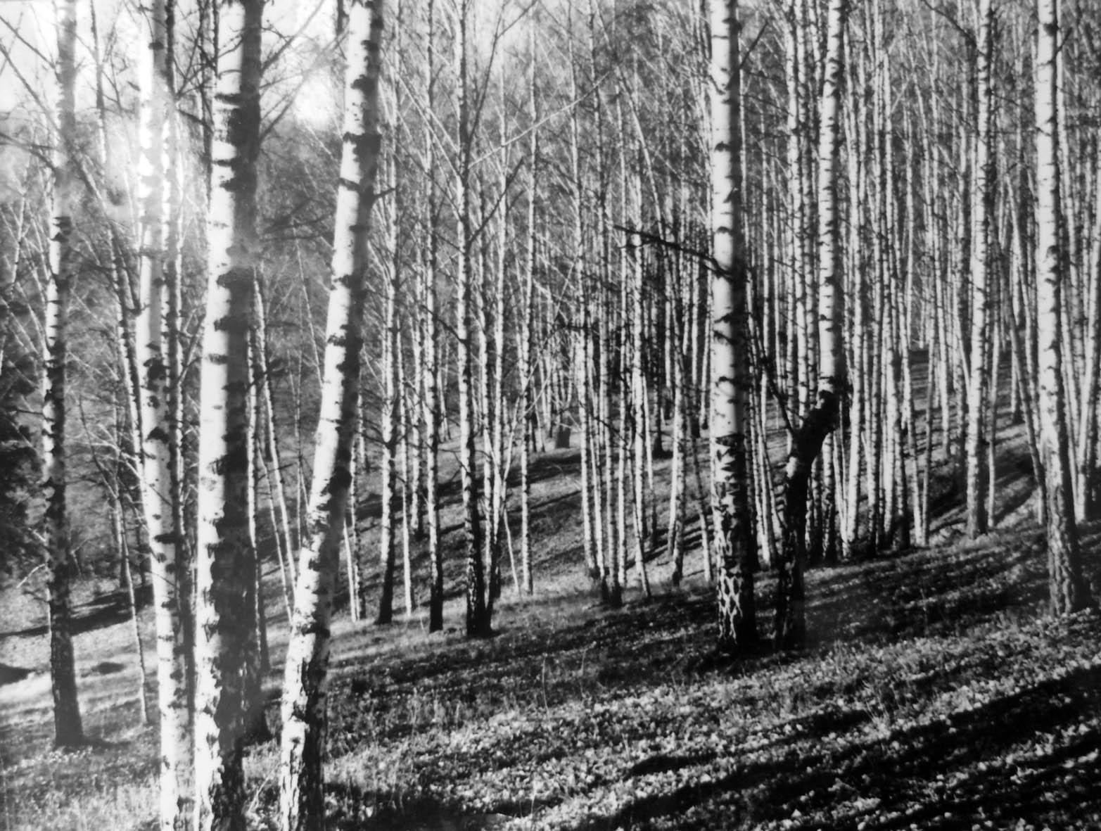 Исторический архив фотографий